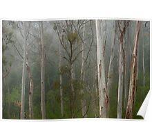 misty gum trees Poster