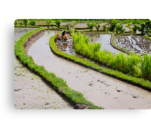 Balinese farmer plowing flooded rice paddy Canvas Print