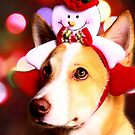 ready for Christmas by lensbaby