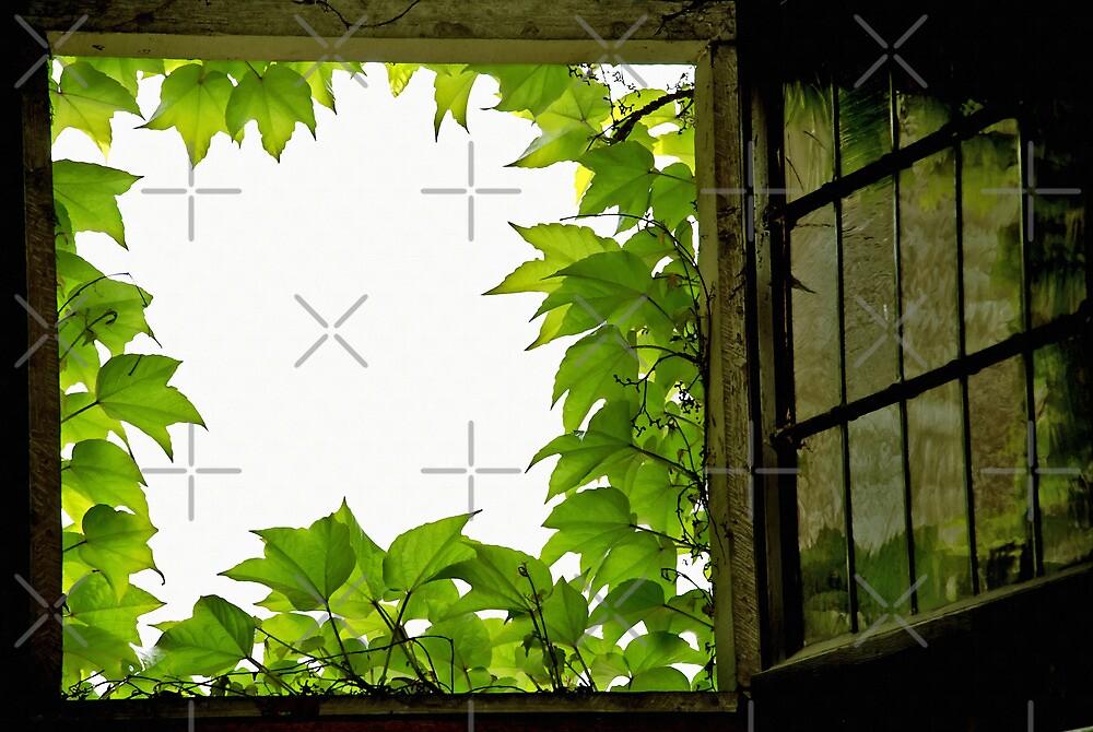 Window by Vac1