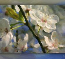 Appleblossoms oil01 by Karen  Securius