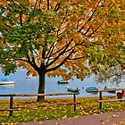 Red bench and yellow autumn tree along the Lago Maggiore by Michael Brewer