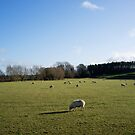 Sheep in a Field by Flo Smith
