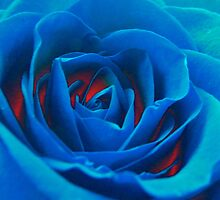 Impossible Rose by JDToomer