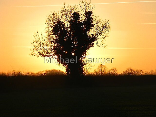 One Lonely Tree by Michael  Sawyer