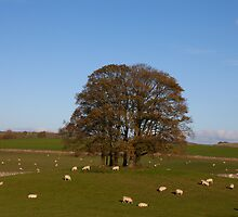 Malham Trees by Nick Atkin