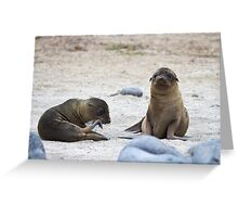 Galagapos Fur Seals Greeting Card