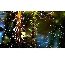 Spider and dew drops Photographic Print
