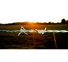 Barbed wire in the evening Photographic Print