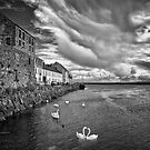Claddagh Swans by Michelle McMahon