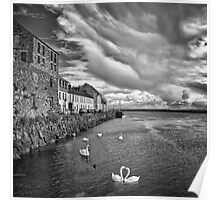Claddagh Swans Poster