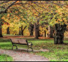 Farewell Autumn by KatMagic Photography