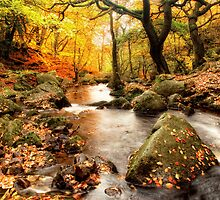 Padley Gorge by cameraimagery
