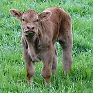 The Youngster In The Field by Barrie Woodward