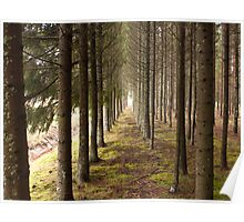 Woodland path Poster