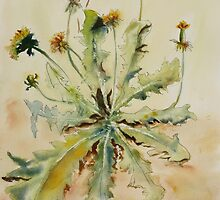 Dandelion by Joyce Ann Burton-Sousa