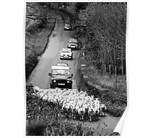 Country lane in Devon Poster