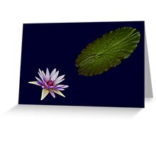 Waterlily and Leaf Greeting Card