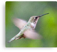 Hummingbird, Mt Robson, BC Canvas Print