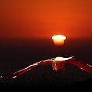 Sea Gull in Sunset by cishvilli