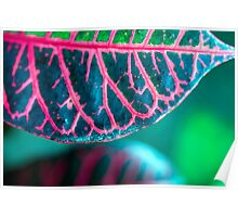 Croton - Boring Name for a Stunning Foliage Poster