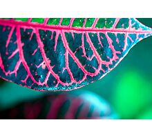 Croton - Boring Name for a Stunning Foliage Photographic Print