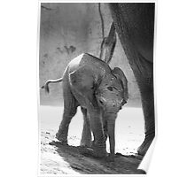 Baby Elephant, black and white Poster