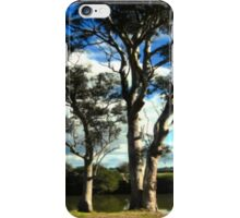 White Gum Trees iPhone Case/Skin