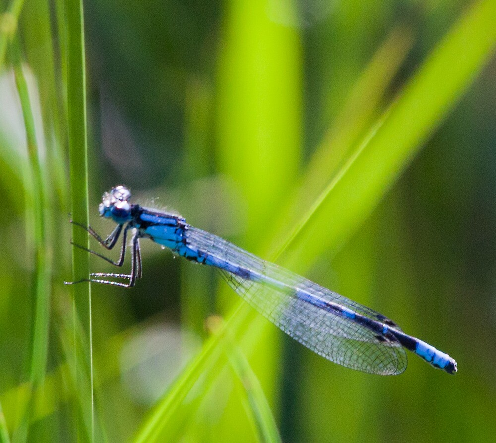 Dragonfly, Mt Robson, BC by Andy Townsend