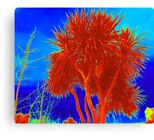 Rare Red Irish Palm Tree Canvas Print