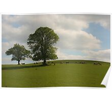 Fallow Deer In The Shade Poster
