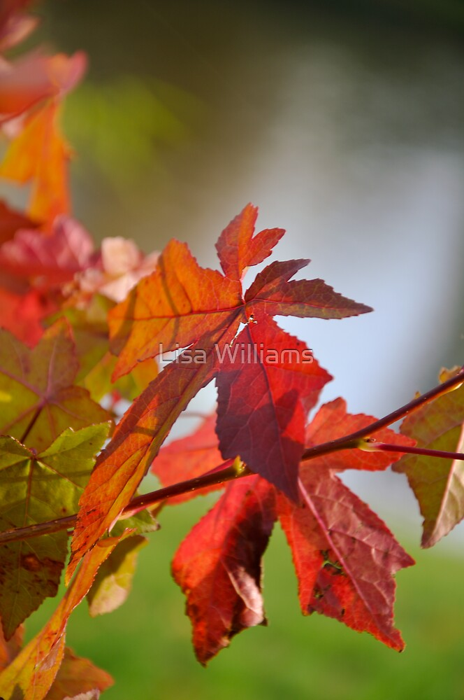 Autumn Colours pt3 by Lisa Williams