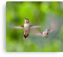 Hummingbirds, Mt Robson, BC Canvas Print