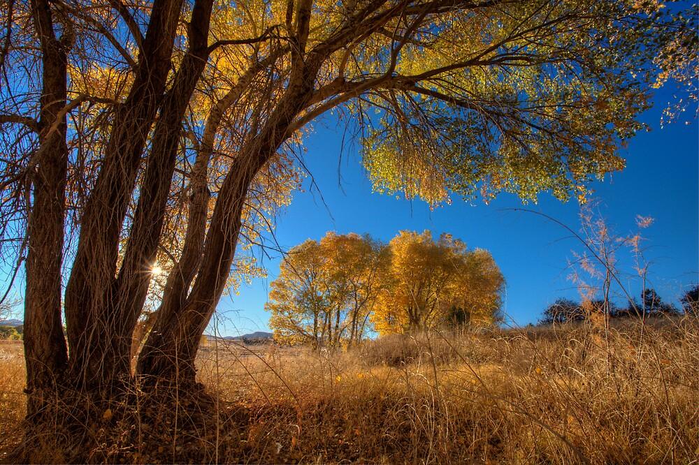 Tree Perspective 1 by Bob Larson