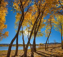 Skinny Fall by Bob Larson