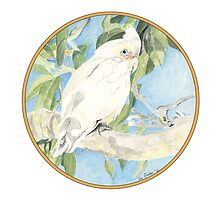 Corella, Birds of Hepburn, 2012 by Liz Archer