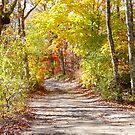 Autumn Arch on Holmes Hole Rd. by Choux