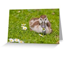 Gosling with Daisy Greeting Card