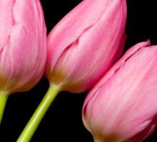Four Pink Tulips Sticker