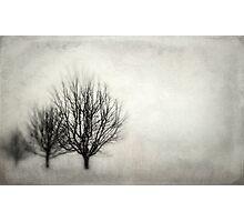 Winter in Matsqui Photographic Print