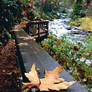 autumn on Sweet Creek... by Allan  Erickson