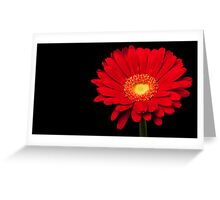 Red Gerbera Daisy Greeting Card