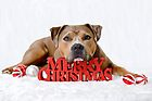 Merry Christmas from Bruno by ruthlessphotos