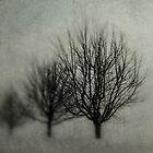 Winters Solitude by Annie Lemay  Photography