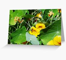 Spare Bee 30 09 12 Greeting Card