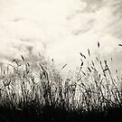 Grass by AngelaFanton