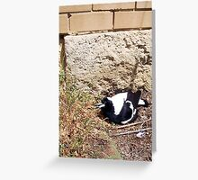Magpie Two - 07 11 12 Greeting Card