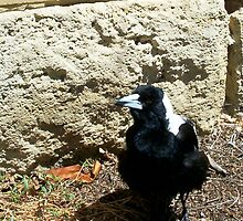 Magpie One - 07 11 12 by Robert Phillips