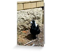 Magpie One - 07 11 12 Greeting Card