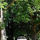Alfa Romeo Giulia Sprint GT  by Flo Smith
